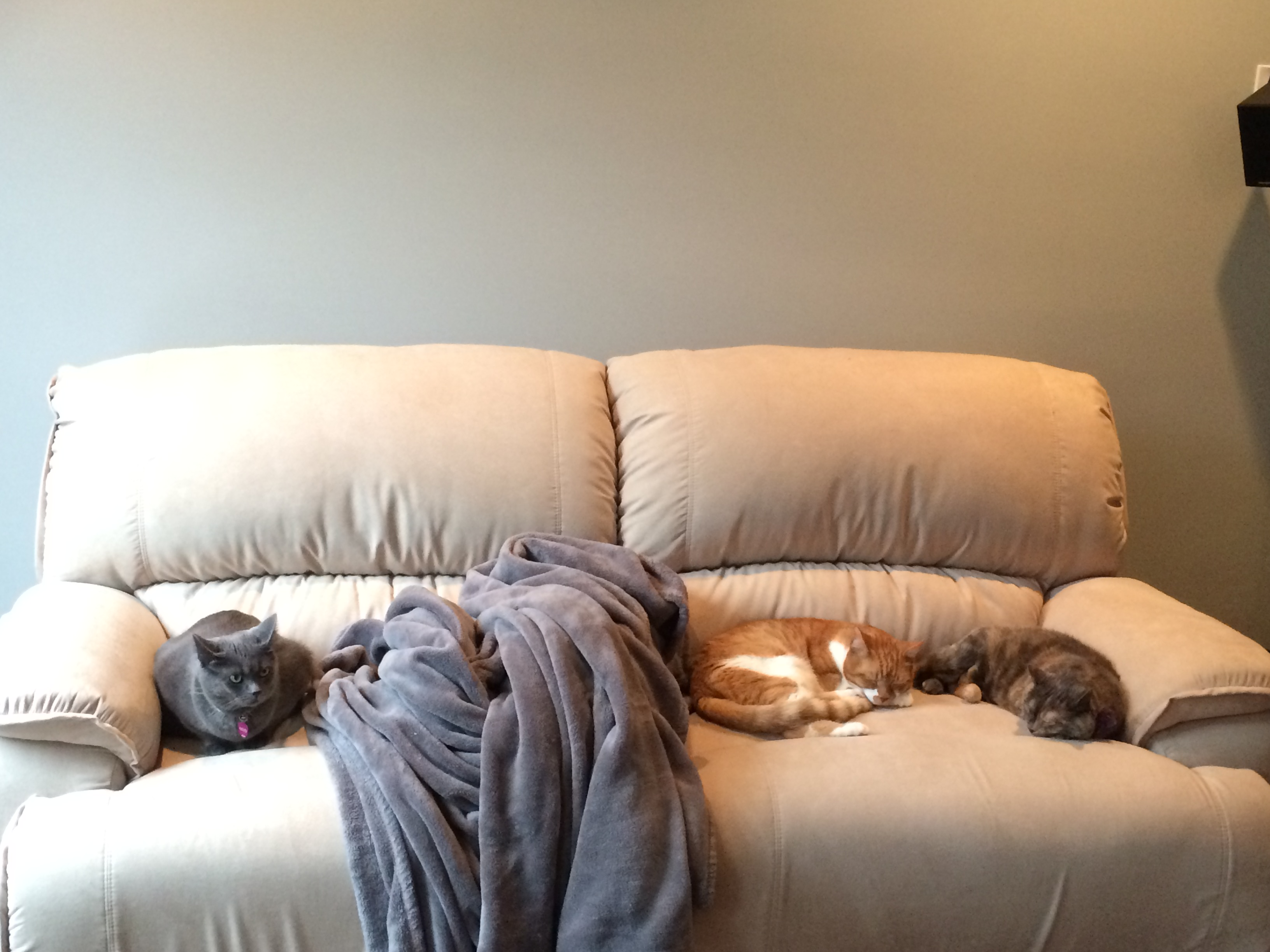 The cats enjoying the new couch