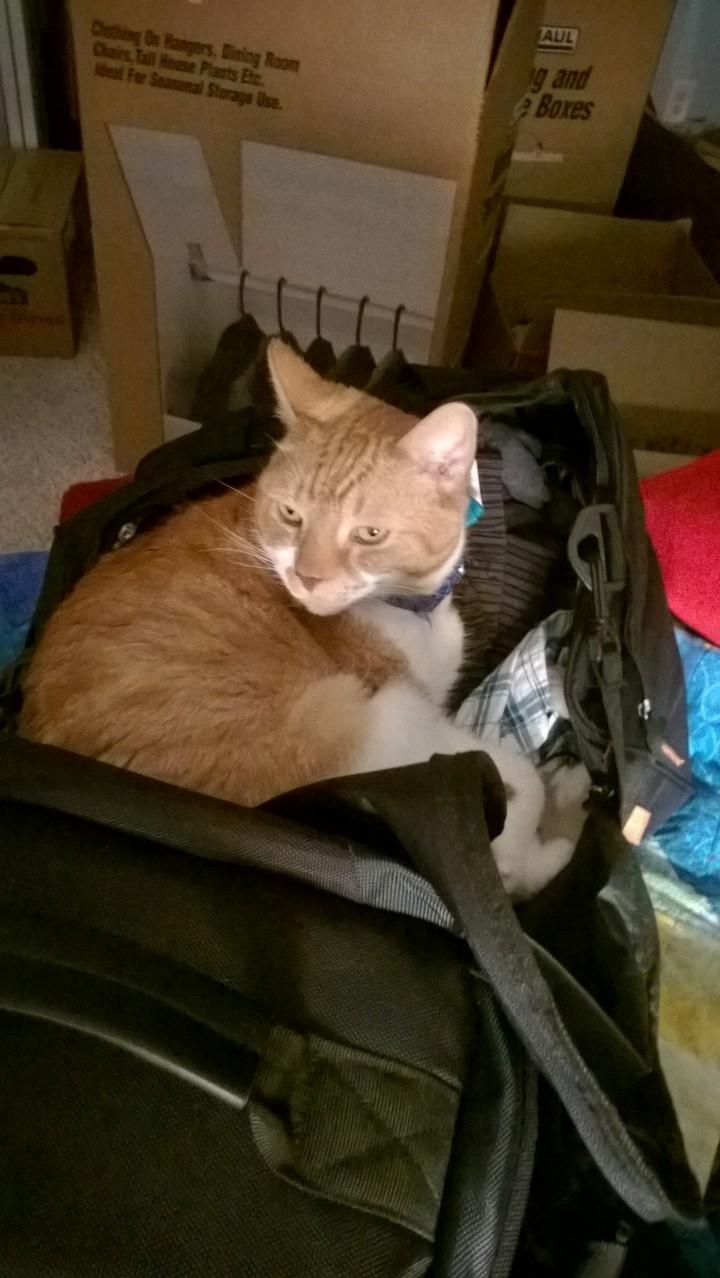 Owen helping unpack