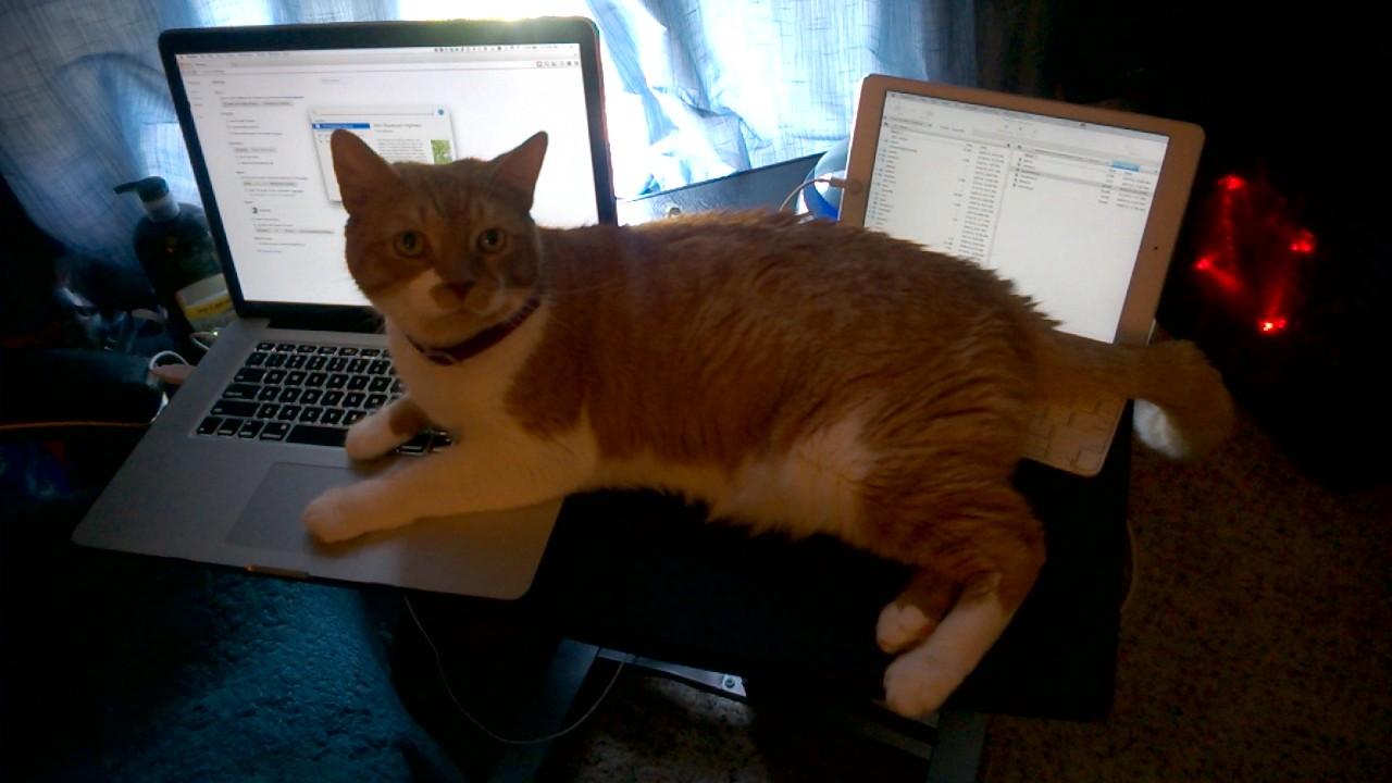 Owen loves to help me code